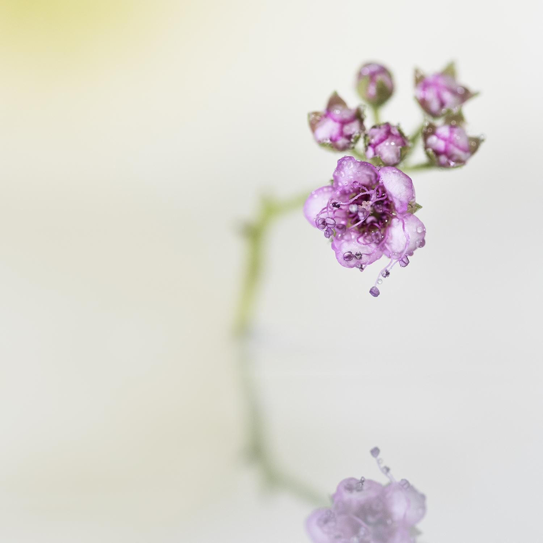 Pure nature art photography Ina Vrinssen